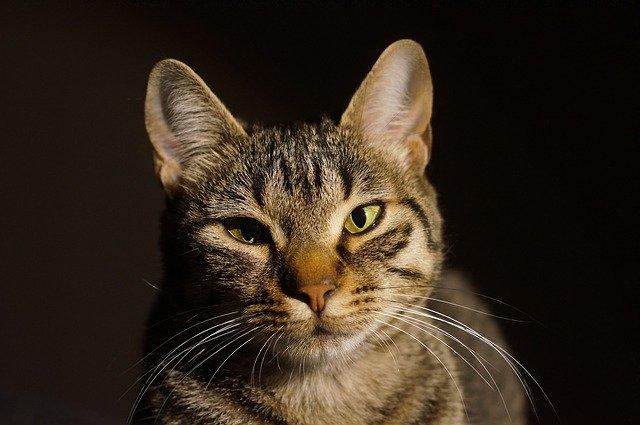 zamračená kočka