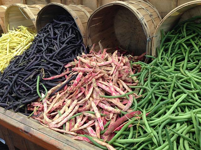 Výběr fazolí